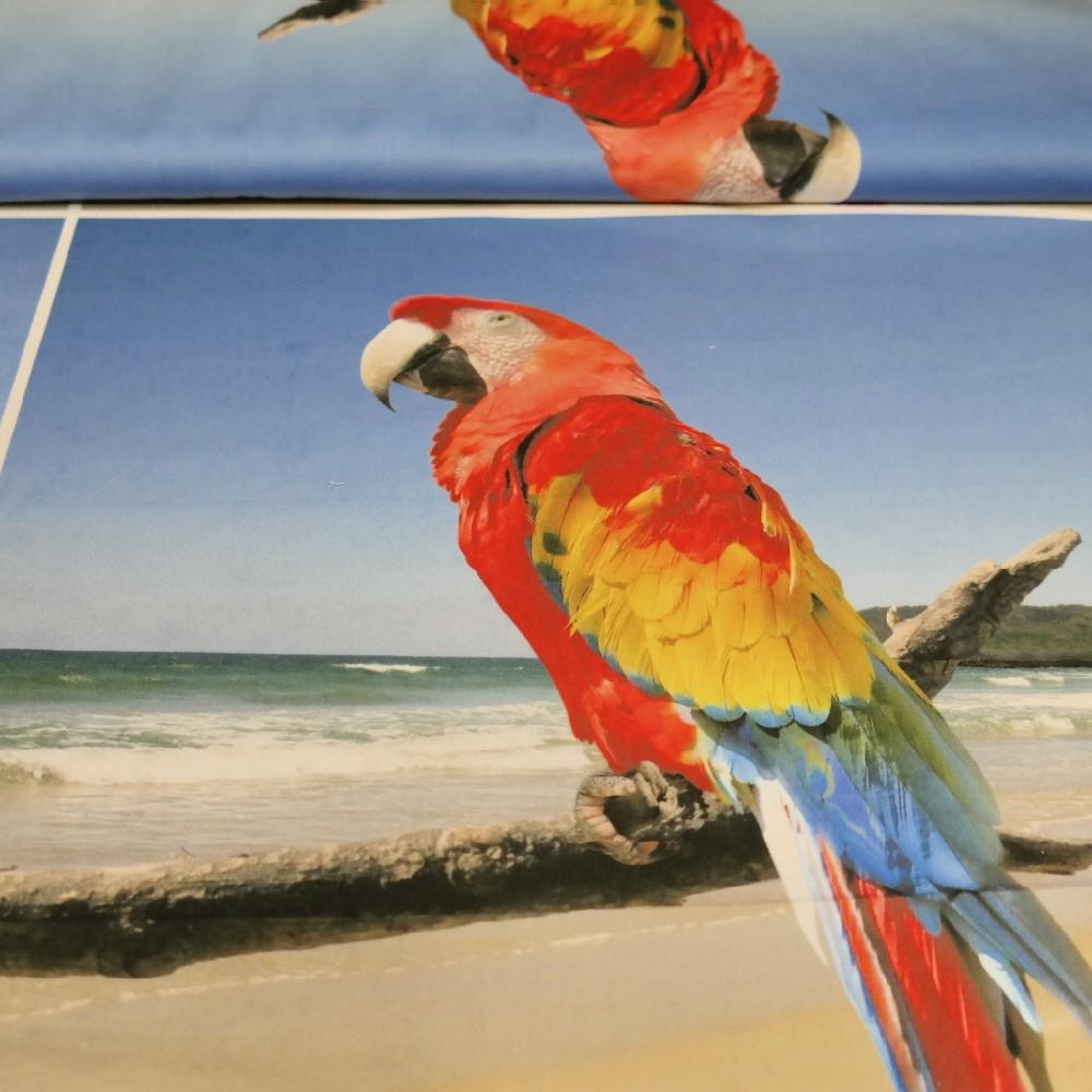 Dekoračka moře,papoušci