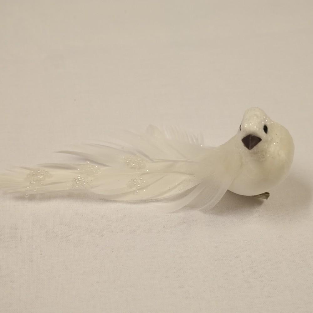 ptáček bílý