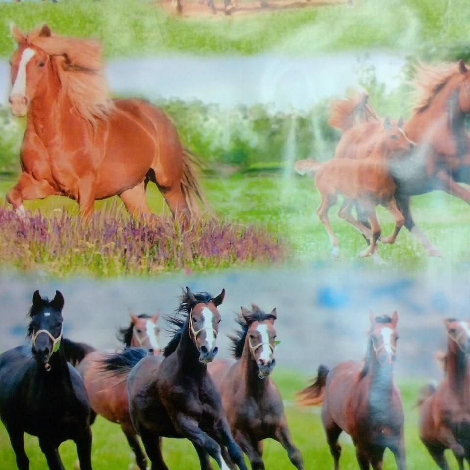 Ubrus PVC /koně
