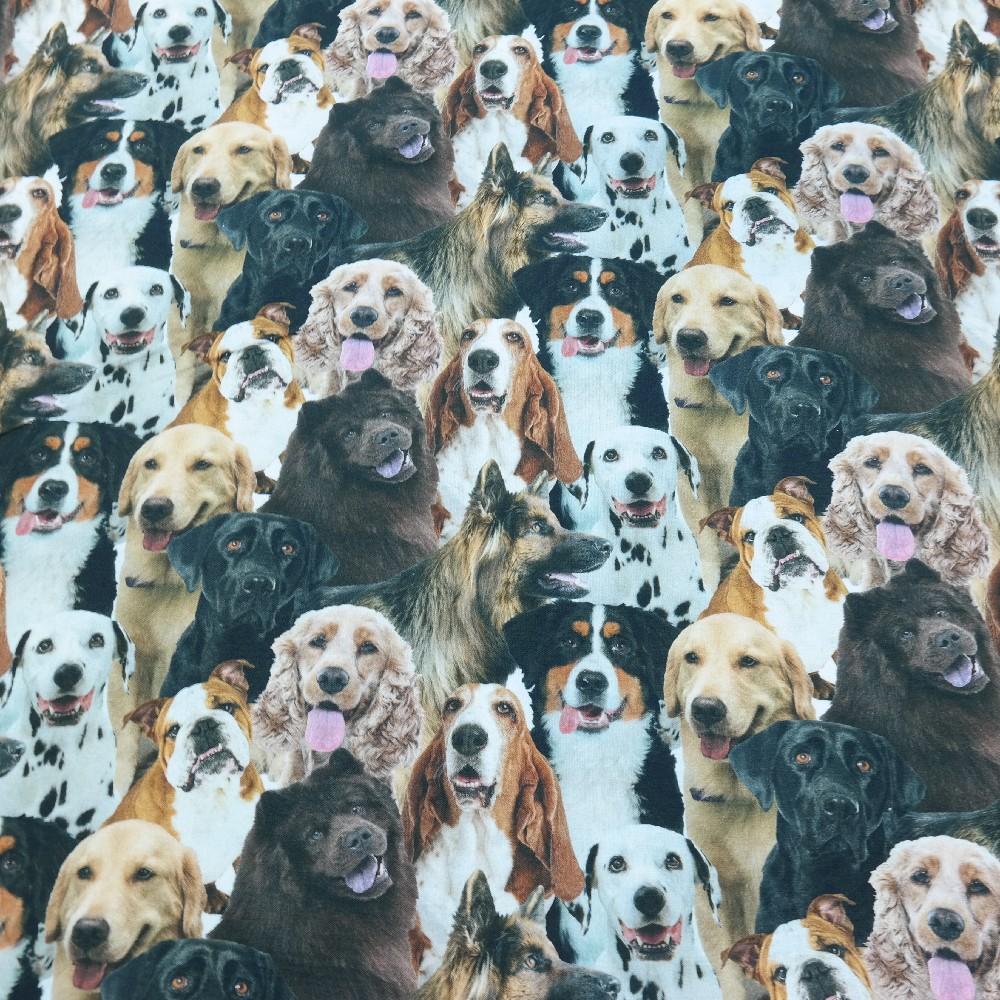 bavlna psi