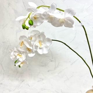 květina um bílá139kč